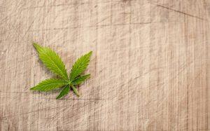 Marihuana lecznicza - jak wygląda